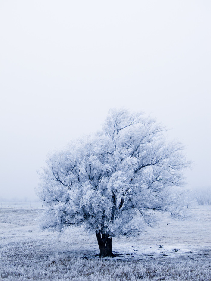 1. How gorgeous is this frosted tree...