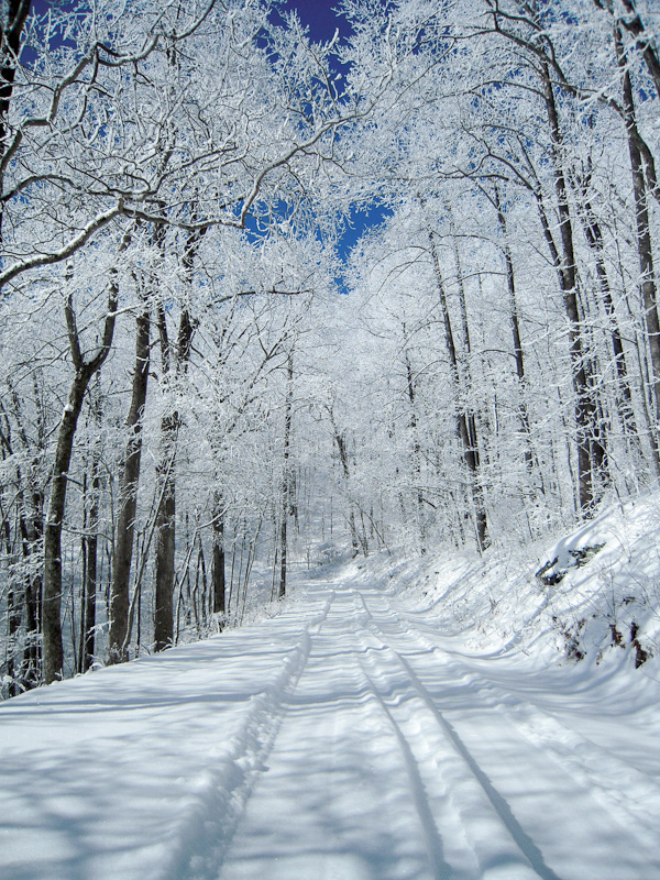 11 Beautiful Snow Photos Of Georgia