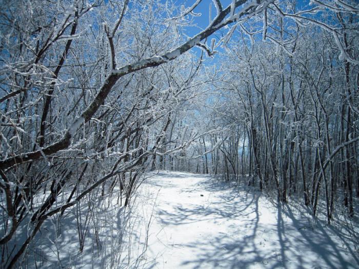 7. Winter Wonderland on top of Hawk Mountain - January 12, 2011