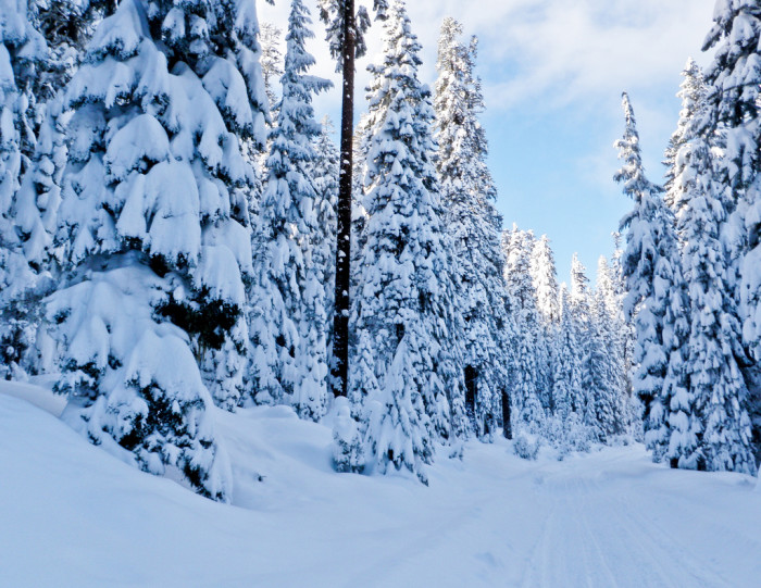 15. A winter wonderland on the Four Mile Lake Ski Trail in Klamath.
