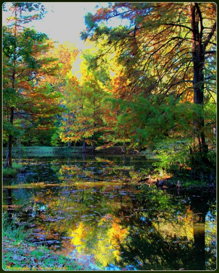 5. Between the beautifully-colored foliage and the pristine lake, this spot in Hinds County would be an ideal place for a serene getaway.