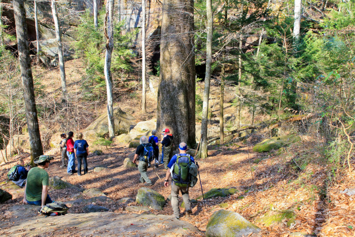 13. Go hiking through the Sipsey Wilderness.