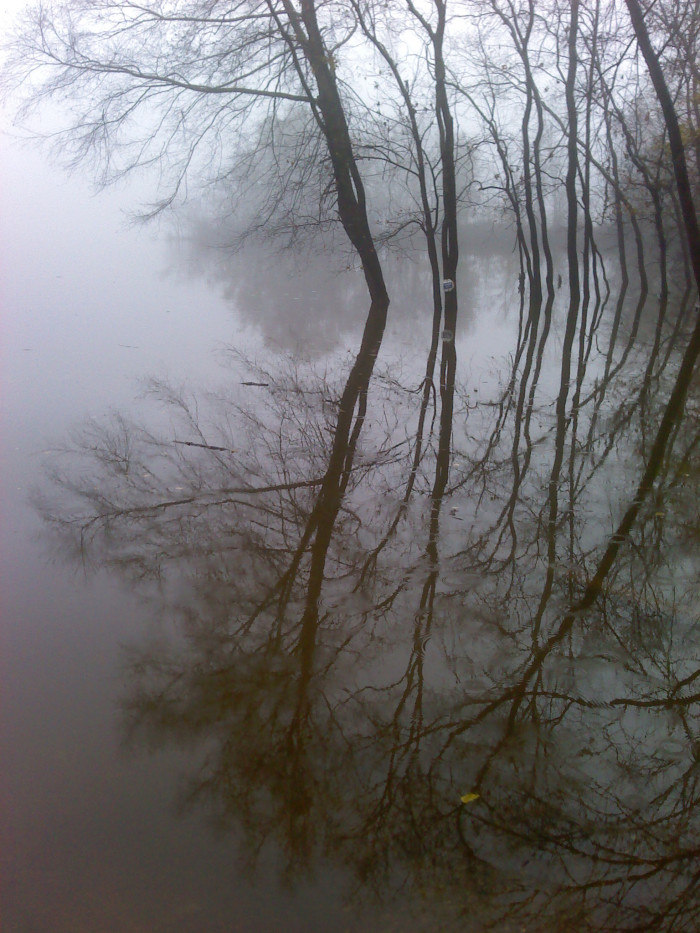 6. This reflection shot on the Alabama River is AMAZING!
