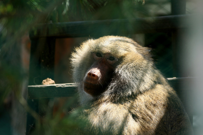 11. See the animals at Lupa Zoo.