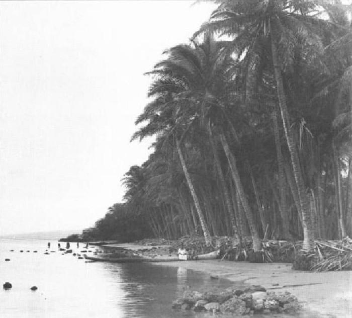 6) A lovely Kapuaiwa Grove on Molokai.