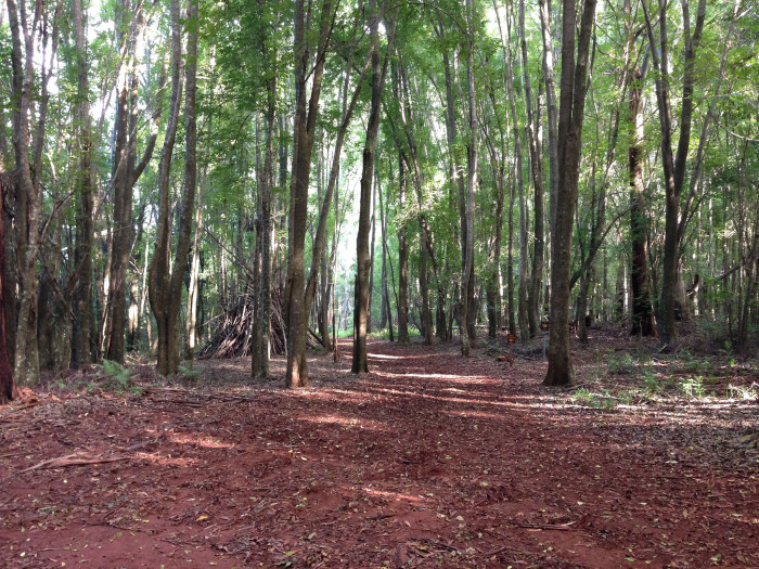 6) The Makawao Forest