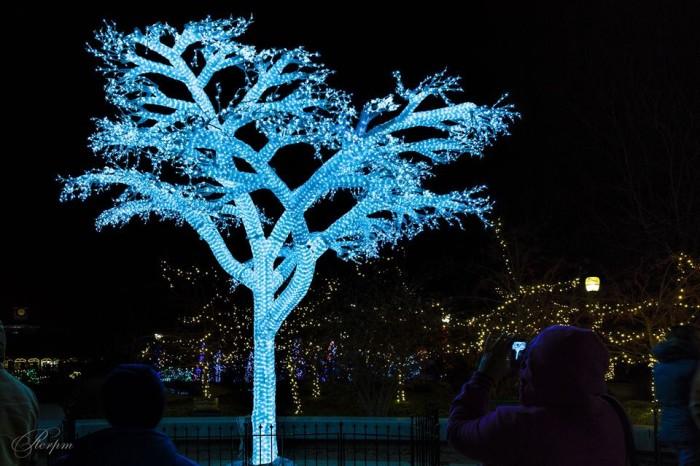6.Wild Lights, Saint Louis Zoo