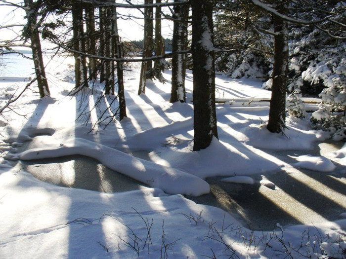 10. A crisp winter day in the forest means bright lights and sharp shadows.
