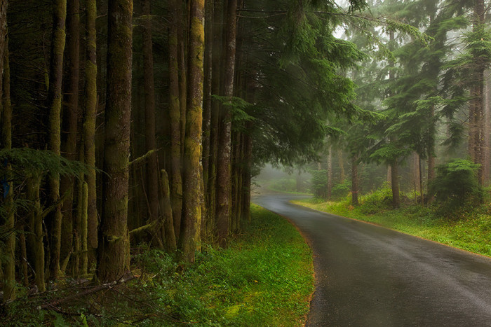 11. Dense evergreen forests