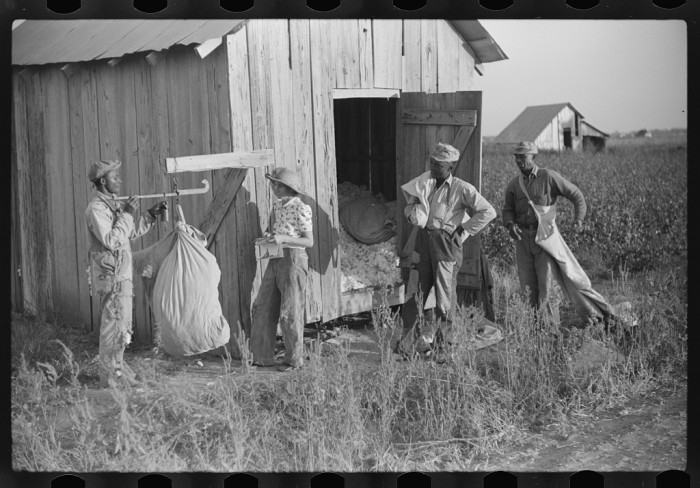 6. Merigold farmers weigh cotton in 1939 – just one year before thousands of Mississippi farm workers either entered the military or took other jobs.