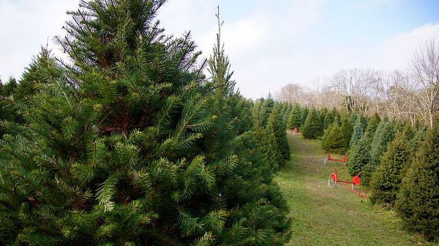 4. Christmas trees in America very well may have originated in Pennsylvania; the first record of a Christmas tree in America was in the diary of a Lancaster resident in 1821.