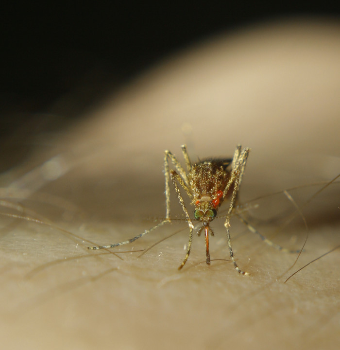 11. Mosquitos kill us all.