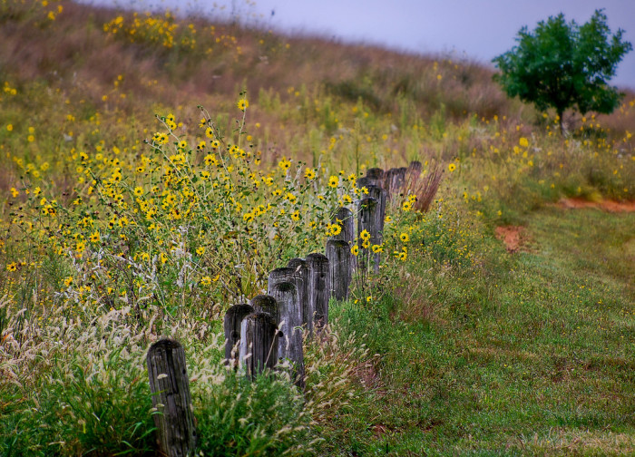 """11. """"Old Post Fence."""""""
