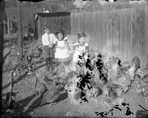 "6. ""Three children in a chicken coop area feeding the chickens and guinea fowl."""