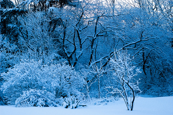 5. The first snowfall in Northern Maine gives an otherworldly blue feel to the forest.