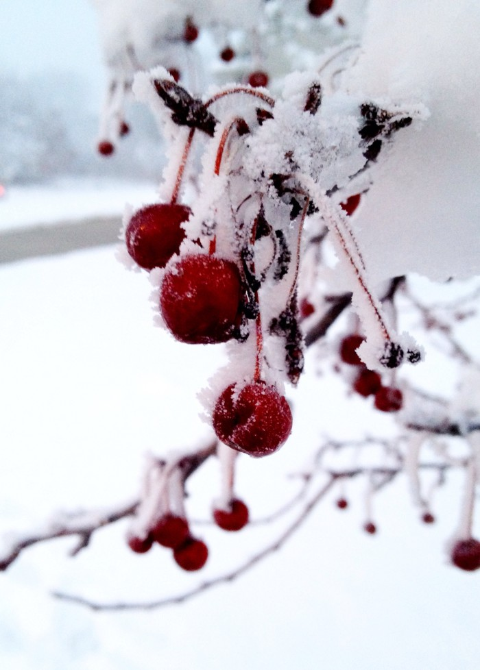 18. A little bit of color shines through in these frozen red berries.