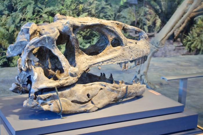 14. Our dinosaur bones are a paleontologist's dream.