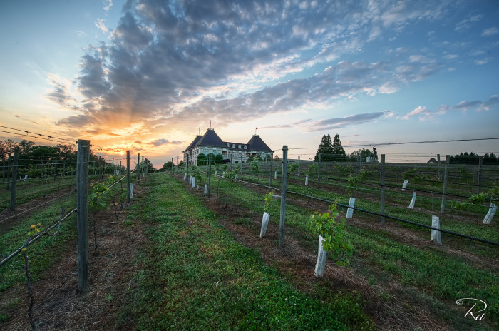 8. Take a weekend trip to Chateau Elan Winery