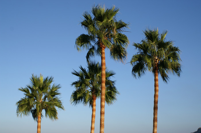 11. Palm trees. Just every once in awhile.