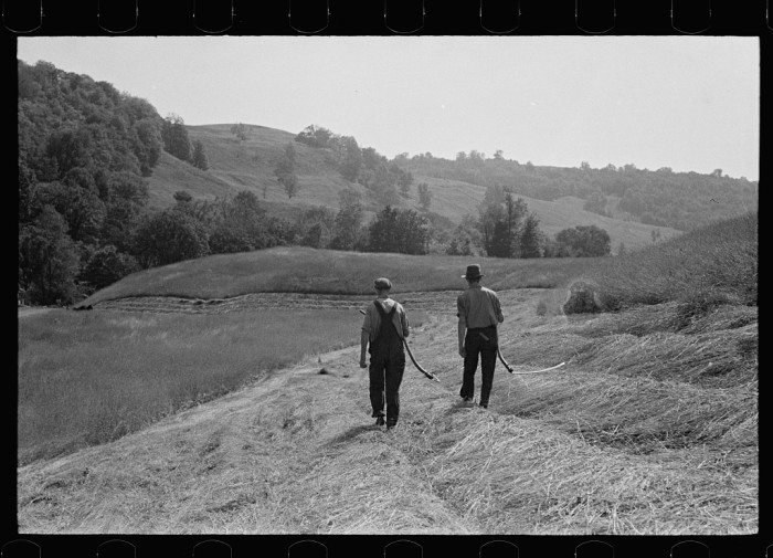 7.  Cutting hay, Windsor County, Vermont.