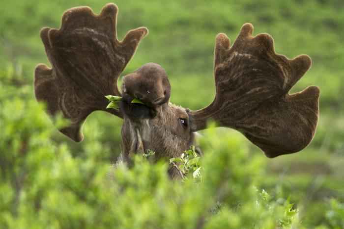 3) The gift of the best wildlife around.