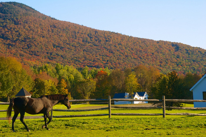 8.Trotting in Vermont