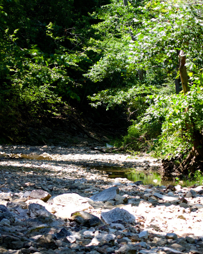 8.South Fork of the Grindstone Creek, Columbia