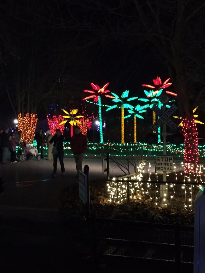 8. Wild Lights, St. Louis Zoo