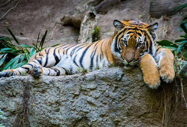 3. A woman was bitten by a tiger after she snuck into the Omaha zoo.
