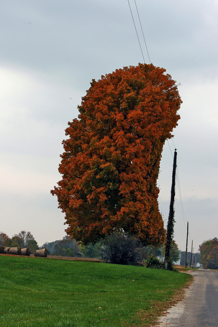 4. This is an actual tree somewhere in Indiana... Weird, right?