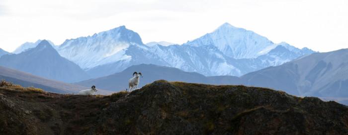 9) Goats on a ridge.