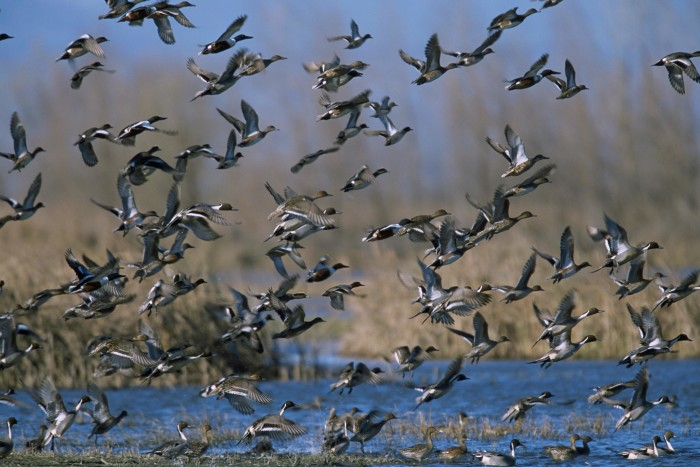 3. Catahoula National Wildlife Refuge