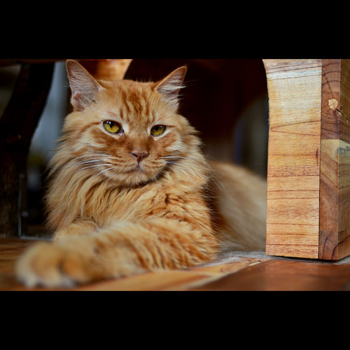 12. Cat Cafes