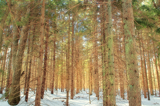 5. Walk Pinchot Trail in Lackawanna County.
