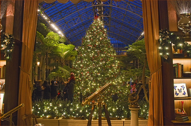 8. Admire the fountain-inspired Christmas display at Longwood Gardens in Kennett Square.