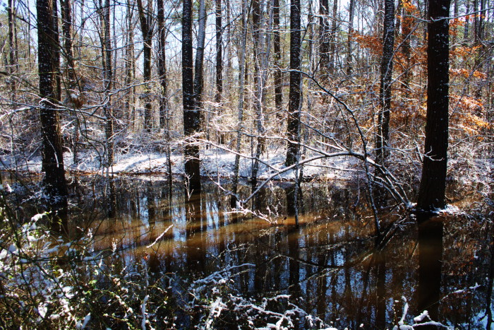 8. A March snowfall completely transforms the Noxubee Wildlife Refuge.
