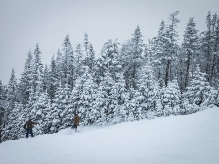 11. During the winter, pines might carry the heaviest weight of all.