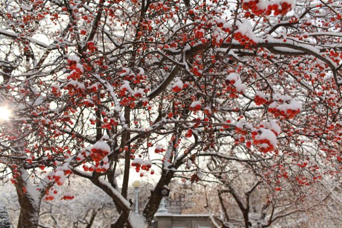 2. Boston Public Garden. Sometimes the beauty of winter is in the little frosty details.