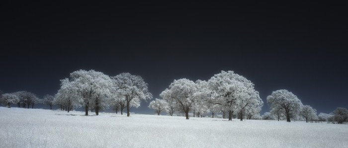 8) The snowfall on these trees is so uniform it's almost unreal. (Comanche County)