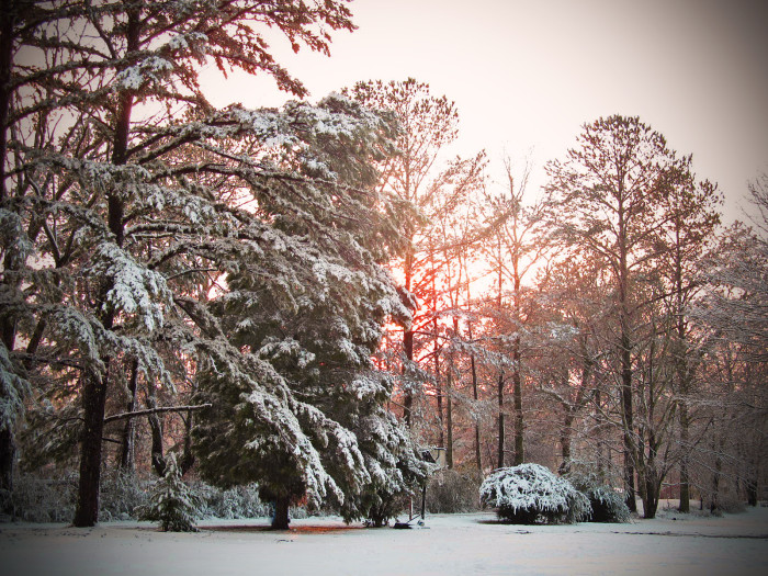12. This gorgeous winter glow, captured in January 2013, highlights the snow-covered trees in the most perfect way!