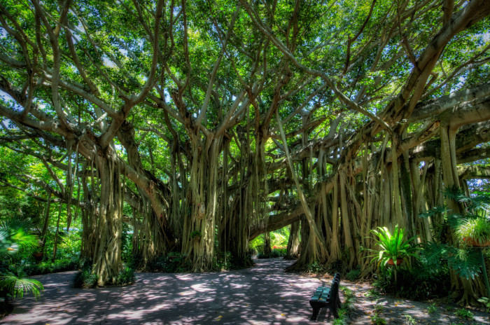 3. These banyan trees in Winter Haven surely become an enchanted forest at night.