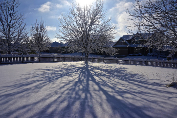 21. The sun behind this bare tree creates long, reaching shadows on the snow.