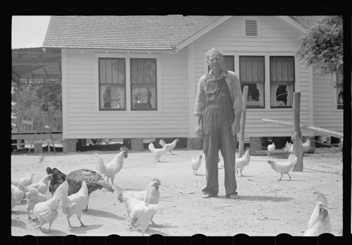 11. A man and his hens.