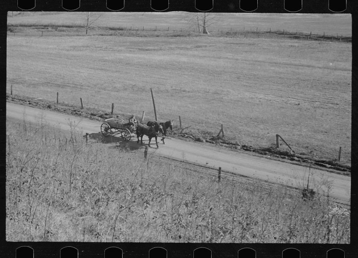 3. This is a snapshot of some abandoned farmland from 1935 in Brown County.