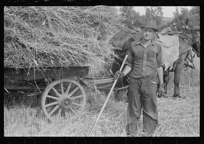 """Mechanicsburg (vicinity), Ohio. Harvest hand and helper on the Virgil Thaxton farm."""