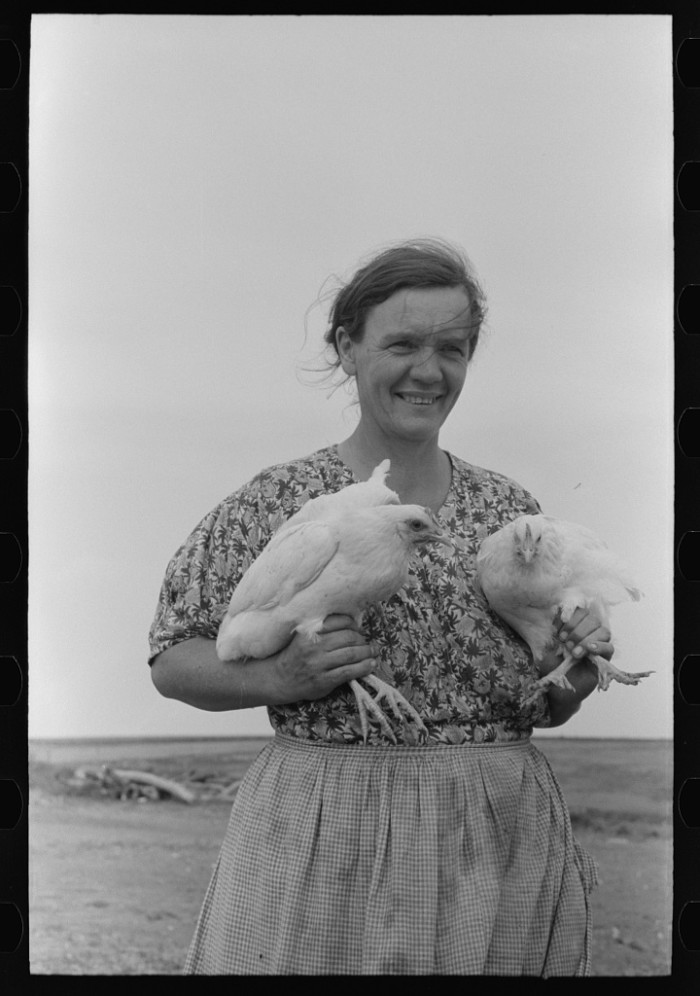 """2. """"Mrs. Shoenfeldt, wife of FSA (Farm Security Administration) client, Sheridan County, Kansas. Chickens are an important part of live at home program for this family."""" (1939)"""