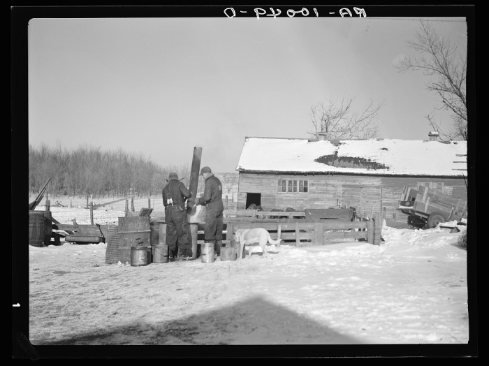 """3. """"Rustan brothers preparing a 'warm drink' for their hogs. Farm is now owned by loan company. Has not been owner-operated for six years. Title is not clear but loan company collects rent and makes very few repairs. Two hundred forty acres, crop share. Near Dickens, Ohio."""""""