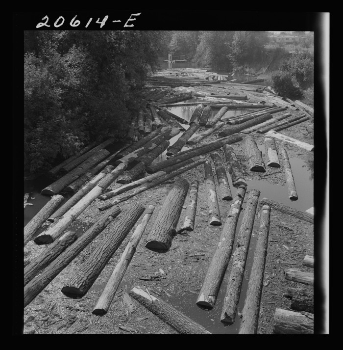 "18. ""Logs at sawmill on Marys River near Corvallis, Oregon"""