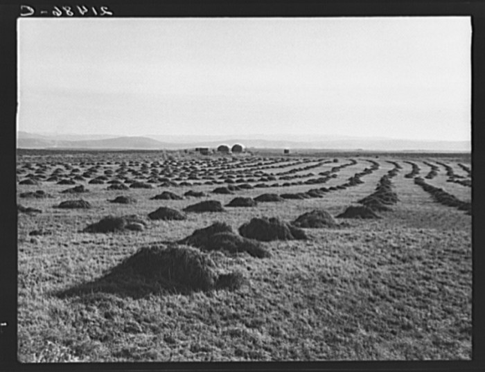 8. Sunset Valley, Malheur County, 1939.