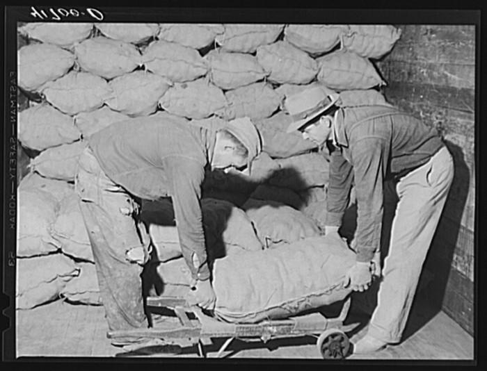 5. Loading sacked potatoes into freight car for shipment. Woodman Potato Company. (Caribou,1940)